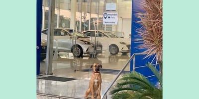 perro agencia auto