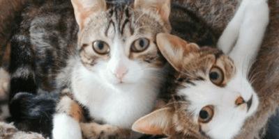 dos gatas hermanas