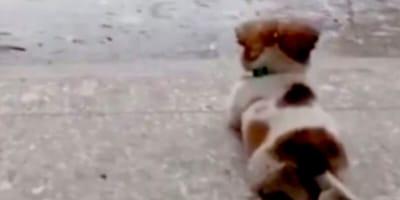 maly-pies-wpatruje-sie-w-deszcz