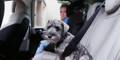 In pieno caldo, lascia il cane e la figlia di 2 anni chiusi in auto