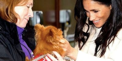 meghan markle stroking dog from mayhew charity