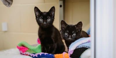 black kittens sitting on multicoloured blanket