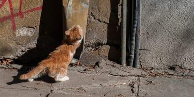 Spacerując spotyka niezwykłego kociaka. Mały detal na jego pyszczku sprawia, że od razu chce go przytulić