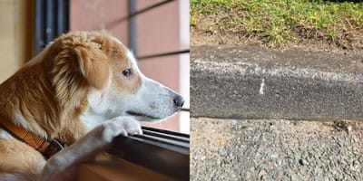 Dog looking out window/markings on ground