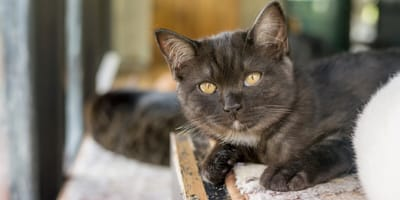 18-letni kot trafia do schroniska. Nikt nie przypuszcza, że wkrótce sprawy nabiorą niespodziewanego obrotu