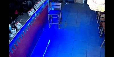 camara seguridad gato