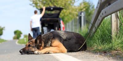cane-abbandonato-in-autostrada