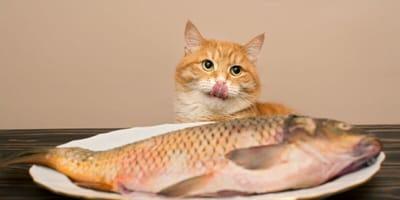 10 tipos de alimentos para gato saludables y naturales