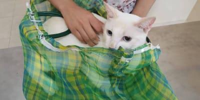bolsa del mandado para mover a tu gato