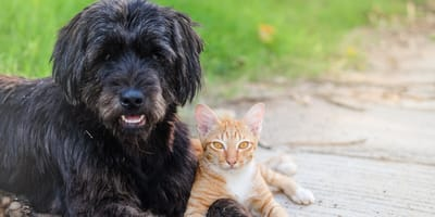 Anticorpi contro il Coronavirus in cani e gatti: lo studio