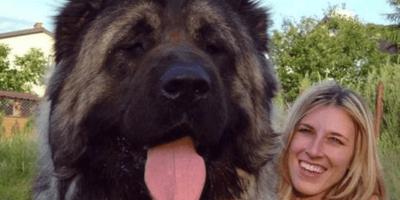 15 perros que son tan grandes que no creerás que son reales (Fotos)
