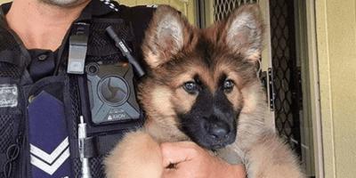 cachorro perro policia
