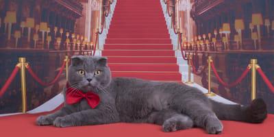 gato alfombra roja