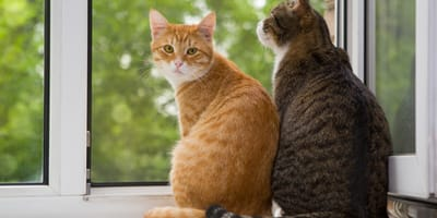 One ginger cat and one brown cat on a window  sill