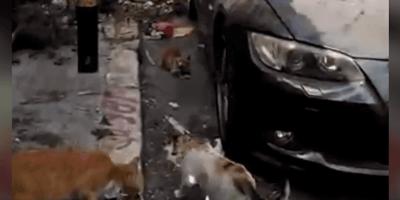 Animals Lebanon in strada a Beirut per salvare cani e gatti