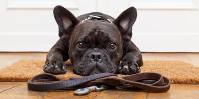 ¿Qué collar antiparasitario es el más adecuado para mi perro?