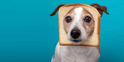 El riesgo de dar alimentos con sal a los perros