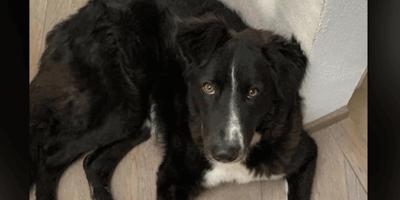 Lyssavirus: la storia paradossale del sesto cane in isolamento