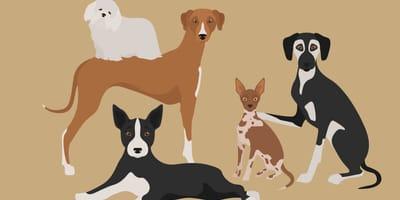 Karikaturen afrikanischer Hunderassen