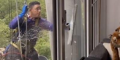 Fensterputzer bei der Arbeit: Was er hinter der Scheibe entdeckt, bringt das Netz zum Ausflippen!