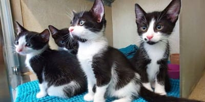 """The """"Beatles"""" kittens need one special fan to take them home"""