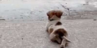 Puppy filmed by owner: Video goes viral because of one small detail