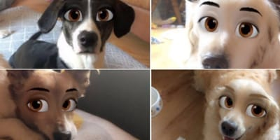Dogs with Disney cartoon eyes