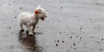 Husky finds poorly kitten in the street: What she does next is mindblowing