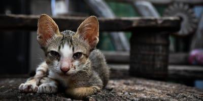 castigo por maltrato animal