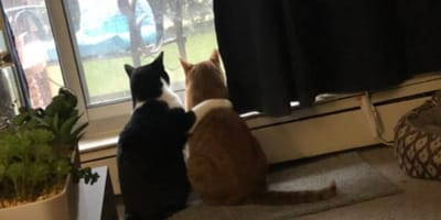 Cat comforts his nervous brother and breaks the internet