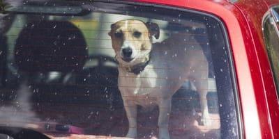 Cane muore asfissiato in auto: la ridicola multa al padrone