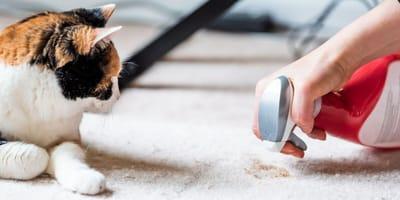Mi gato hace caca en casa: ¿cómo le enseño a hacerlo en la arena?