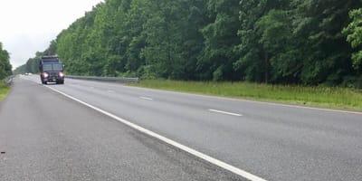 gatito abandonado carretera