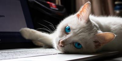 gato computadora