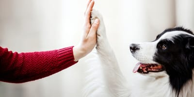 How can I get my dog to trust someone?