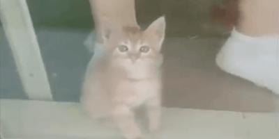 gattino rosso in primo piano