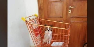 cane in un carrello della spesa