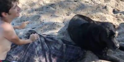 bambino con labrador nero in spiaggia