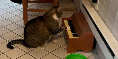 Nauczyła kota grać na pianinie, nie spodziewała się jednak takiego obrotu spraw!