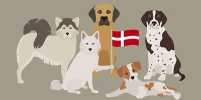 Dänische Hunderassen: 5 Traum-Vierbeiner aus dem Norden