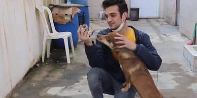 perra adopta a un gatito