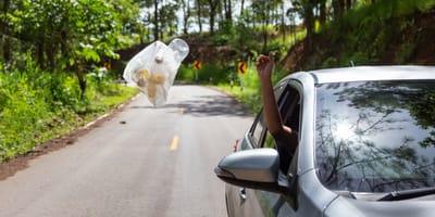 Skrupelloser Autofahrer aus NRW schleudert Lebewesen aus dem Fenster