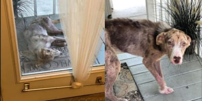 Stray puppy on doorstep