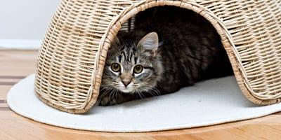 Dlaczego kot się chowa, czyli kocie kryjówki