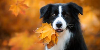 Najładniejsze psy – poznaj 10 ras psów uznawanych za najpiękniejsze!