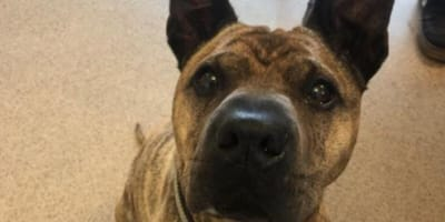 No-one wants Poppy, who's been waiting for a home for almost a year