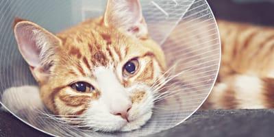 Hautkrebs bei Katzen – Schnelles Handeln ist wichtig