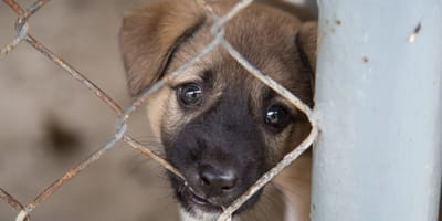 Commentators believe the pets are sold to dog meat restuarants
