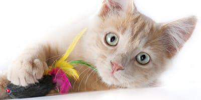 Zabawy z kotem, które uprzyjemnią czas Wam obojgu!