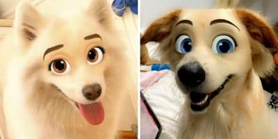 Psy z filtrem Cartoon Face